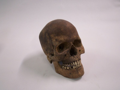 This  is a replica of an unearthed human skull prop that is available for rent for assorted shoots.
